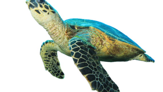 Turtle dating - Dating site satellite seriously