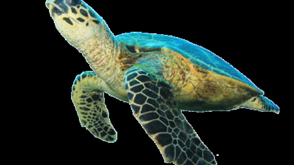 Sea Turtle Symbols Sea Turtle Exploration