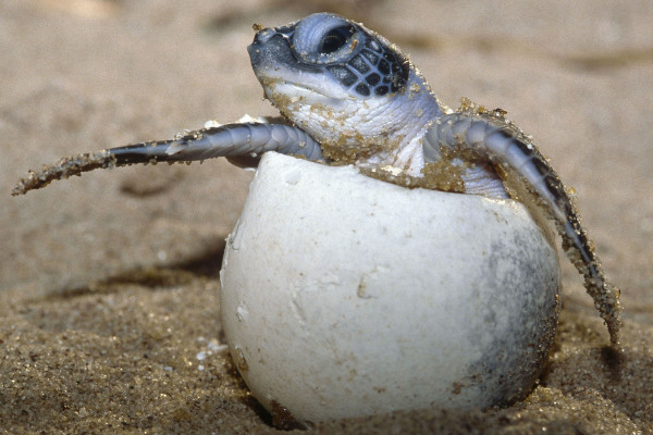Reptiles hatch from eggs
