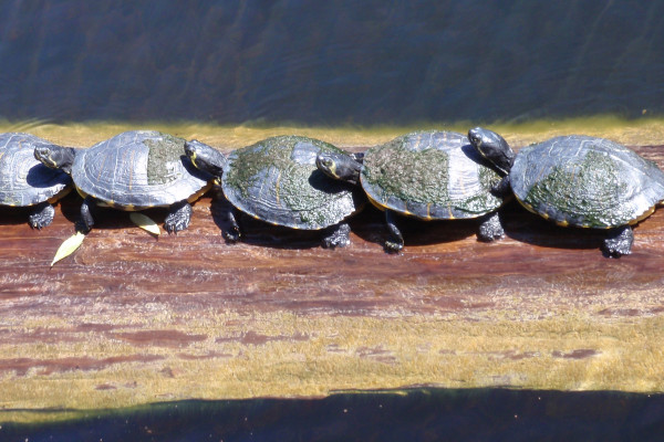 Reptiles are cold-blooded so they have to warm themselves in the sun.
