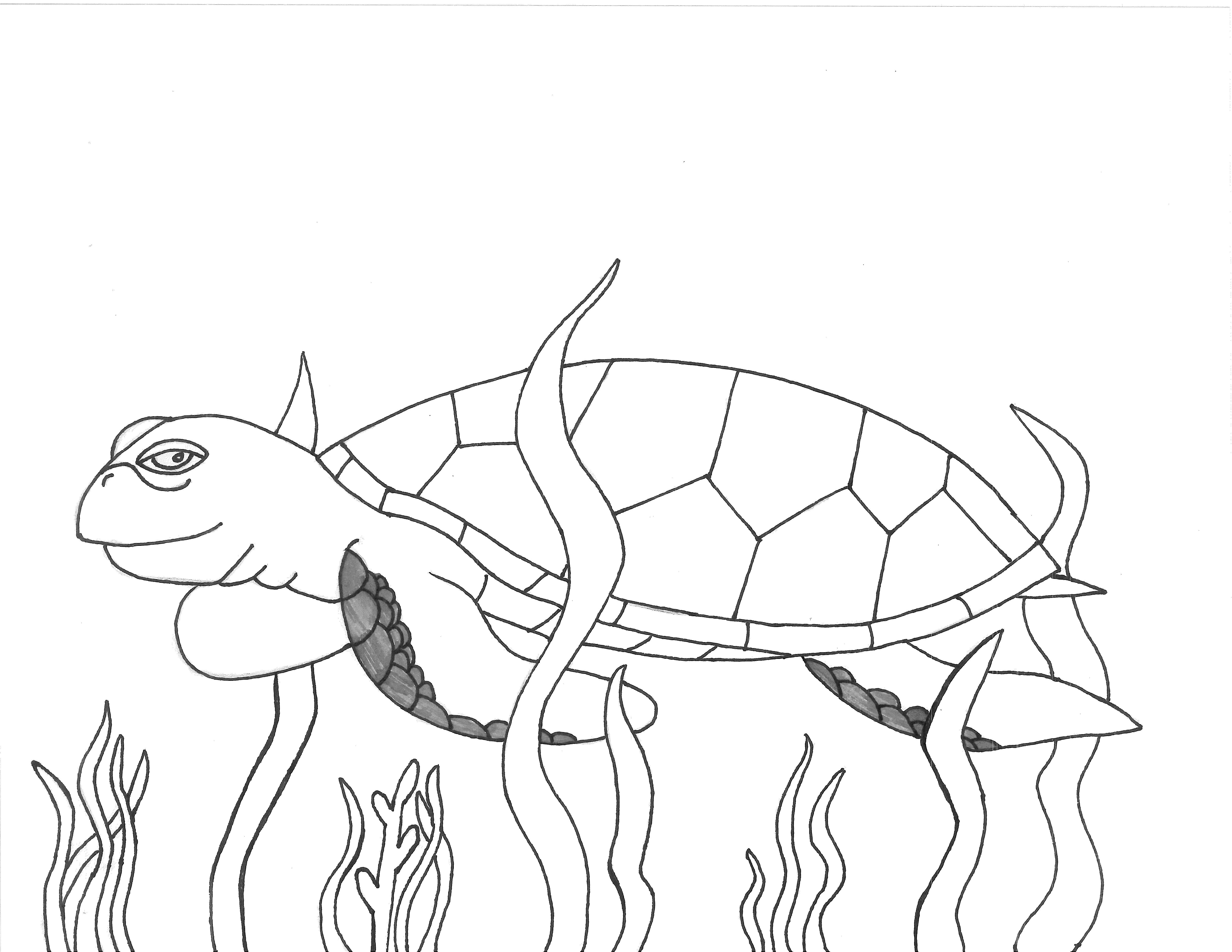 Facts discovery sea turtle exploration for Coloring page turtle