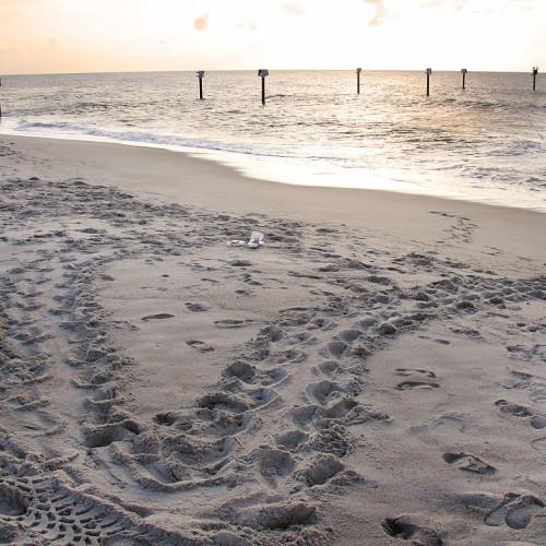 False Crawl tracks taken by Barbara Tillison