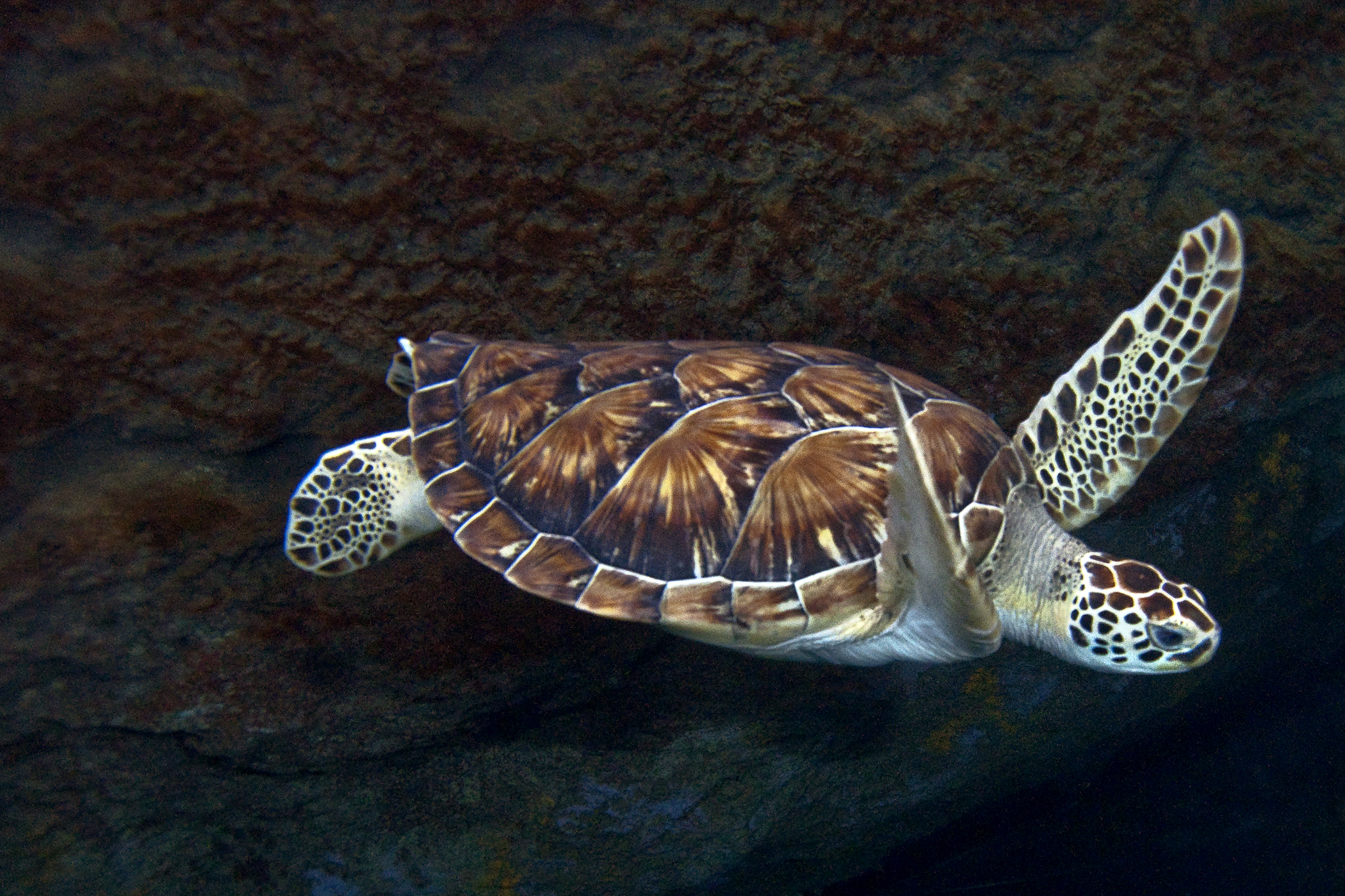 Sea Turtle Adaptations | Sea Turtle Exploration