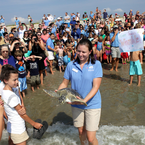 Womble, the green sea turtle, and the crowd