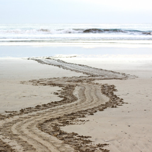 Leatherback crawl track