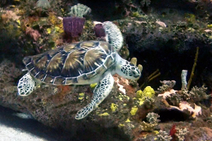 Shelldon the Green Sea Turtle