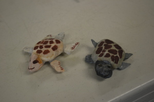 Rock hatchlings