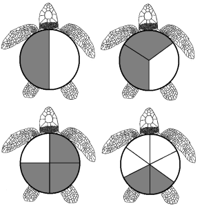 Turtle Fractions Examples