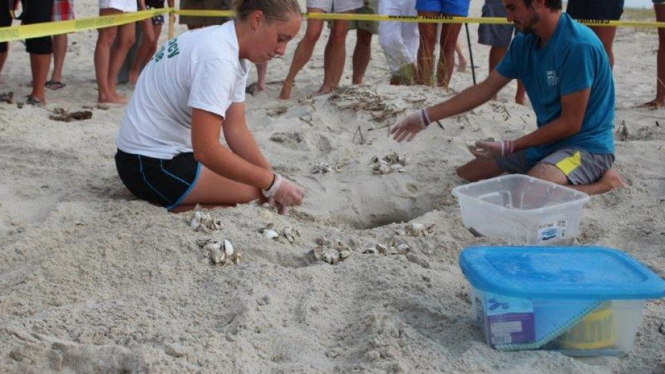 Bald Head Island Sea Turtle Internship