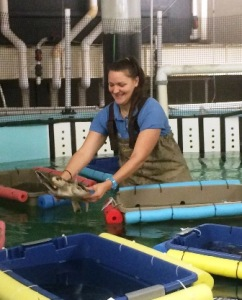 This past winter I helped rehabilitate cold-stunned sea turtles