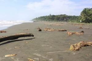 The Pacuare Nature Reserve protects and patrols the beaches for nesting leatherback sea turtles