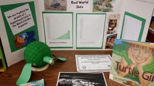 A sea turtle display full of pictures, graphs, and certificates located in the classroom