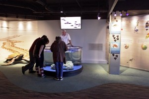 Visitors learn about sea turtles at our sea turtle exhibit