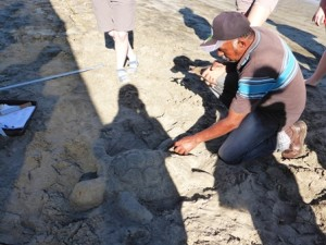 Don shows the group how to tag a sea turtle