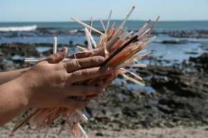 Straws are a popular marine debris item found on beaches that easily get into the ocean and take hundreds of years to break down