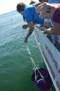 Aquarium staff lower the sea turtle from the boat in a laundry basket