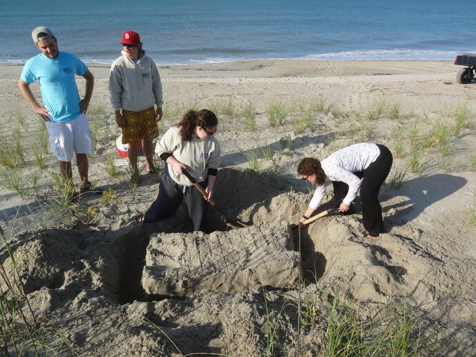 Digging out a nest (photo courtesy Bald Head Island Conservancy)