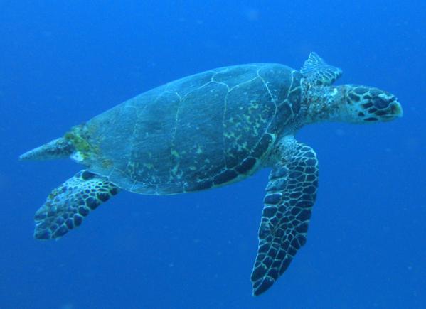 Sea Turtle Facts | Sea Turtle Exploration