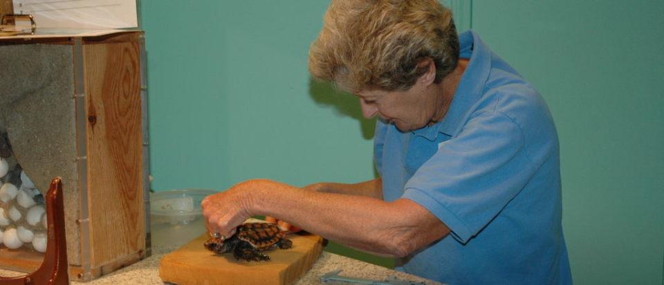 Judy measuring hatchling
