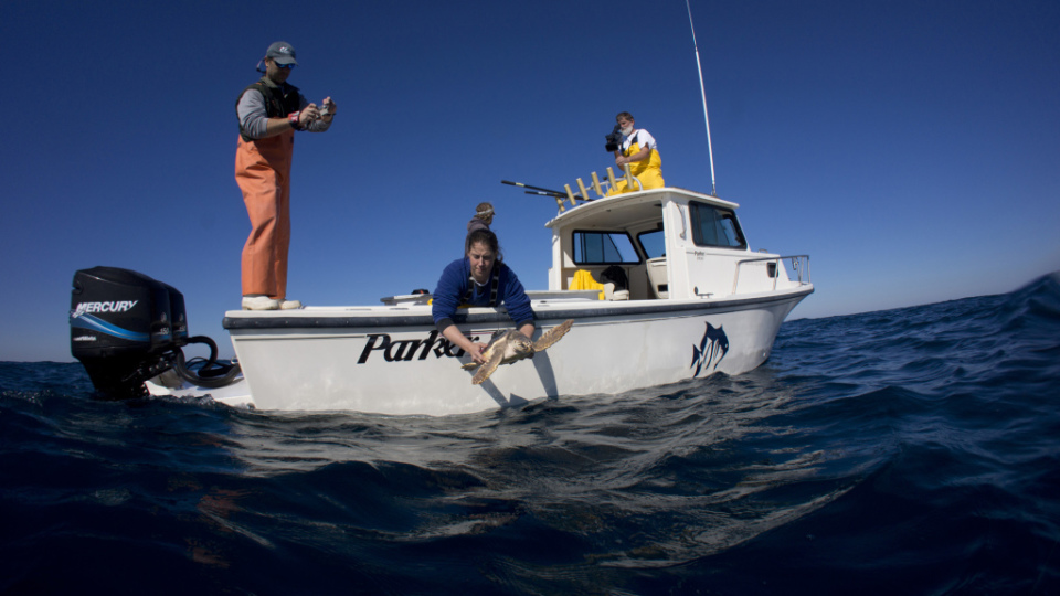 Releasing a Sea Turtle