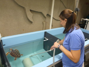Carol cleaning up after a sea turtle