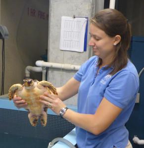 Carol holding a loggerhead turtle.