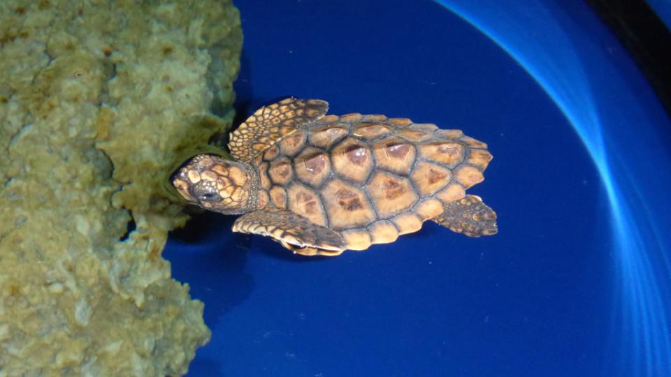 turtle a vs 2