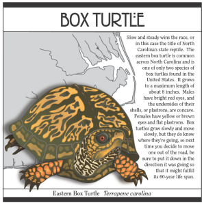 The book includes many turtles from North Carolina.