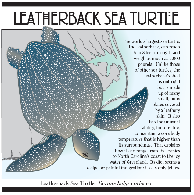 Essay writing on turtle muet essay question 1