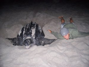 Justin laying next to a Leatherback sea turtle.