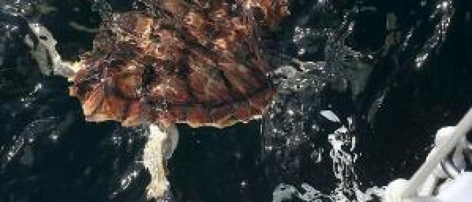 seaturtlereleaseoffshore