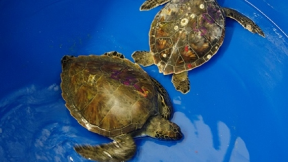 More Than Just a Shell | Sea Turtle Exploration