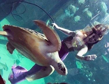 mermaid whitney shelldon resized