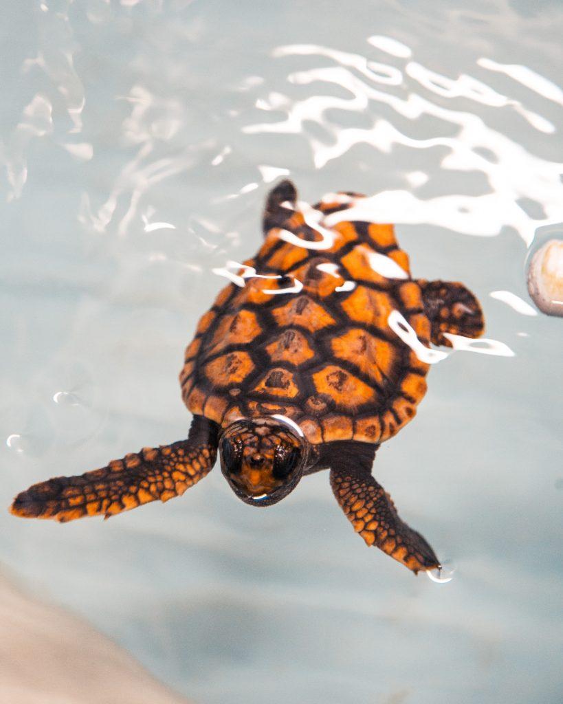 TurtleA_11-2020-1